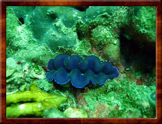 008  SCUBA DIVING Racha Yai Islands Thailand 2