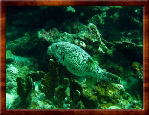 009  SCUBA DIVING Racha Yai Islands Thailand 3