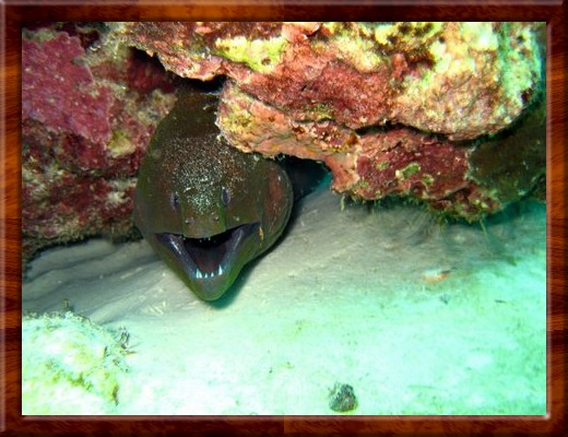 011 DON'T MESS WITH THIS DUDE, MORAY EEL